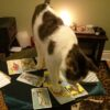 My cat Willow, helping me with a Tarot reading